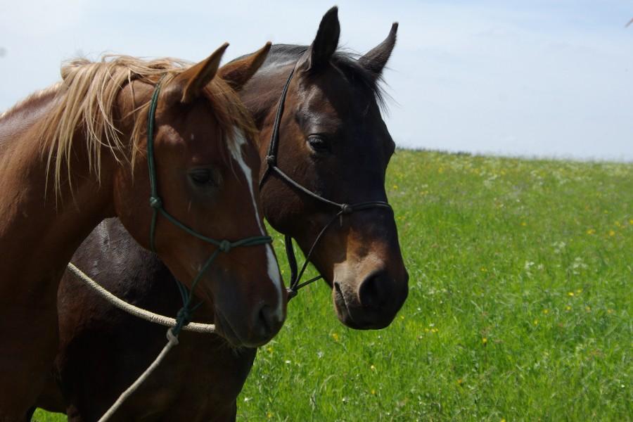 Horsemanship für alle Pferde