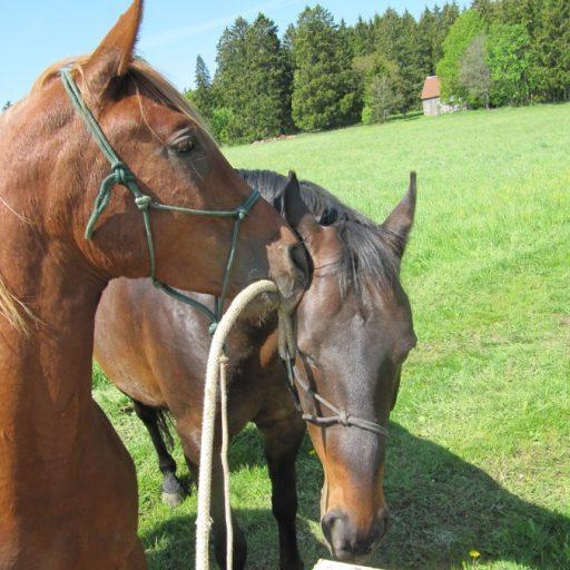 Pferde Eigenschaften