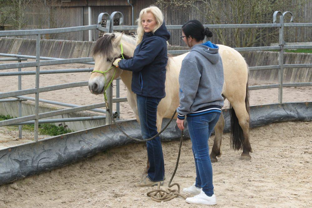 Horsemanship Training Einzeltraining