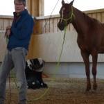 Anmeldung-Pferd Bodenarbeit