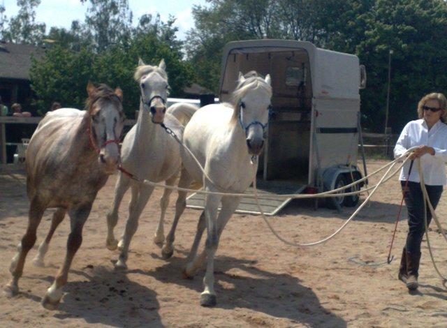 Die Verantwortungen des Pferdes