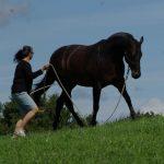 Horsemanship Academy Heike Maier