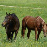 Horsemanship Academy, damit Pferdeträume wahr werden!