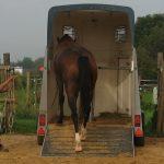 Horsemanship Hänger verladen