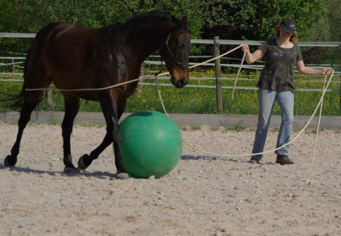 Was tun wenn das Pferd sich erschreckt