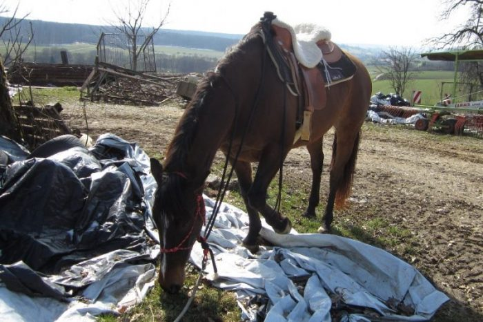 Pferd erschrickt ständig!