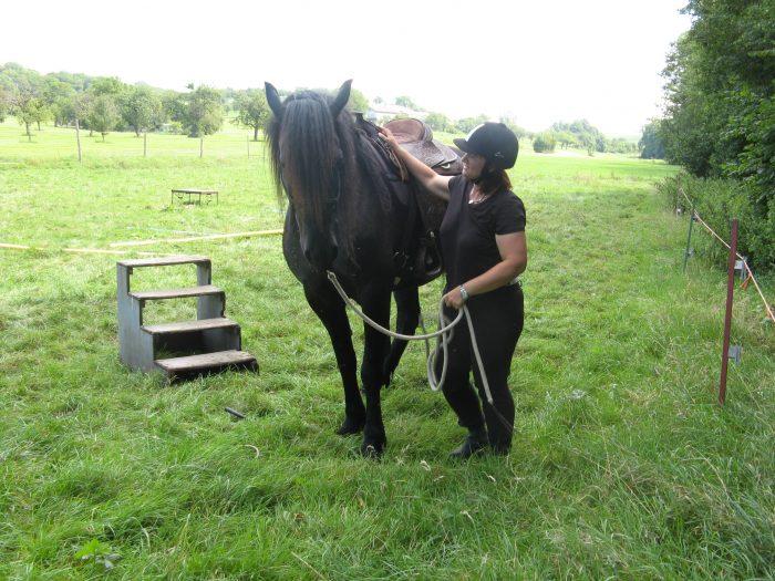 Pferde richtig loben