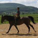 Pferde richtig loben mit Pausen - Horsemanship Academy