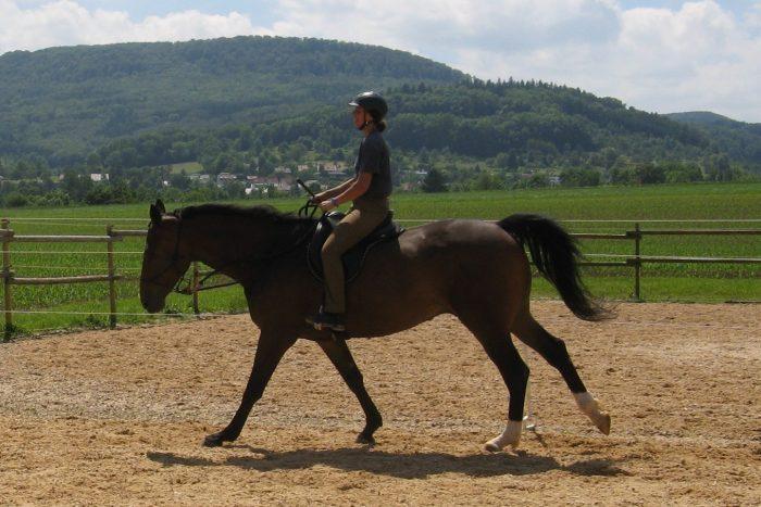 Pferde richtig loben mit Pausen