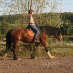 Horsemanship-Shire-Horse