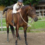 Verantwortungen des Menschen - Horsemanship Academy