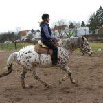 Horsemanship Academy Galopp