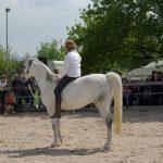 Horsemanship Trainer ohne Sattel