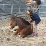 Horsemanship-liegendes Pferd