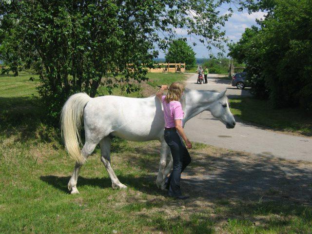 Das Fluchttier Pferd