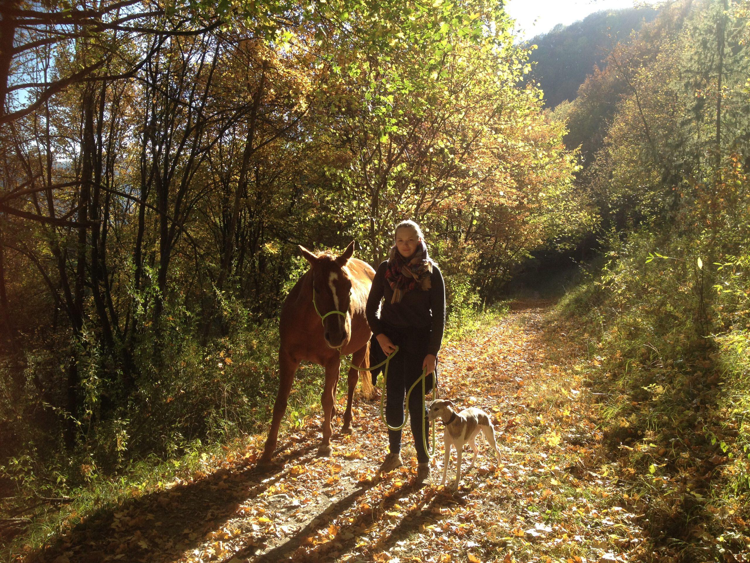 Pferd hat Angst – 5 Tipps